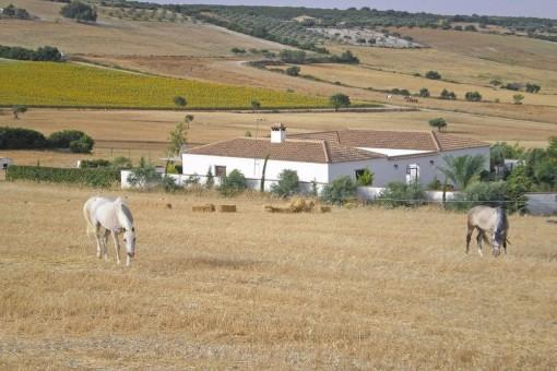 The huge horse paddock