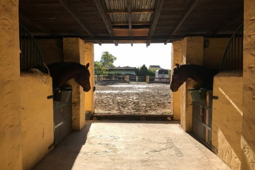 The stable with access to the paddock